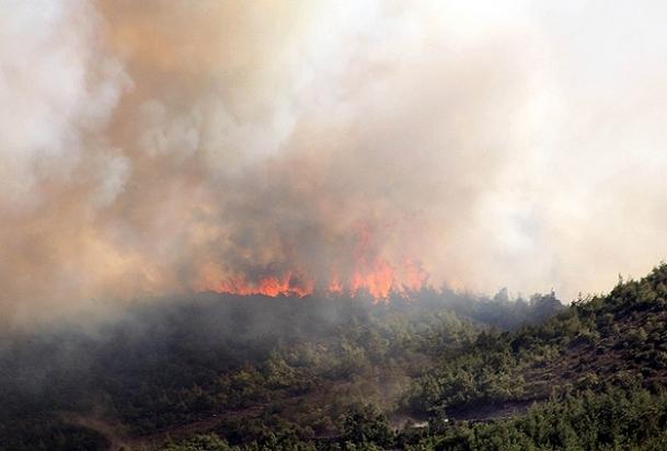 Sarıyer'de ormanlık alanda yangın