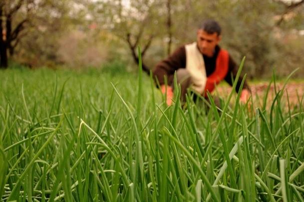 Tarım desteklemelerine yoğun ilgi