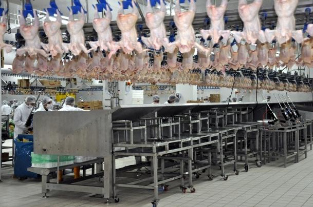 Tavuk eti üretiminde hormon kullanılmıyor