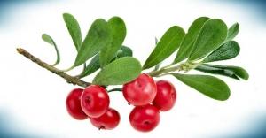 Bilim adamları bu mucize bitkiyi açıkladı!