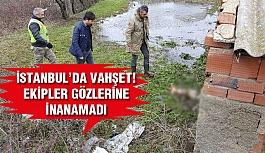 İstanbul'da Hayvan Dehşeti