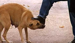Şiddete Uğrayan Bir Hayvan Gördüğünüzde Yapmanız Gerekenler