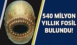 'Anüsü Olmayan' 540 Milyon Yıllık Fosil Bulundu!