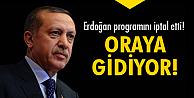 Erdoğan nereye gidiyor?