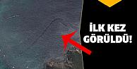 Gizemli yaratık Google Earth'ten keşfedildi!