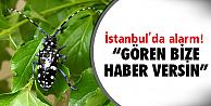 İstanbul'da görüldü!