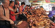 Çin'de Köpek Yeme Festivali