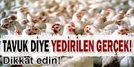 'Tavuk diye önünüze konulan hayvana...