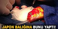 Tümörlü Japon balığı..