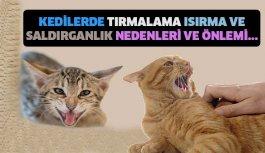 Kedilerde tırmalama ısırma ve saldırganlık...