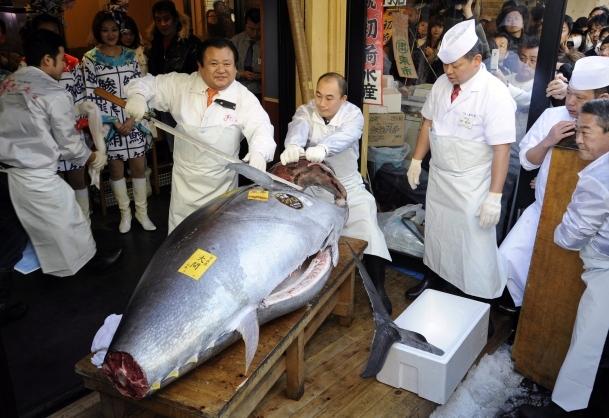 Ton balığı rekor fiyata satıldı
