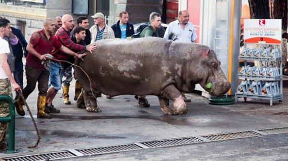 Vahşi hayvanlar sokağa döküldü!