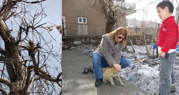 Yaralı kedi için mahalleli seferber oldu