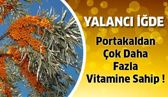 Portakaldan Çok Daha Fazla Vitamine Sahip !