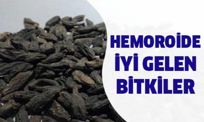 Hemoroide iyi gelen bitki...