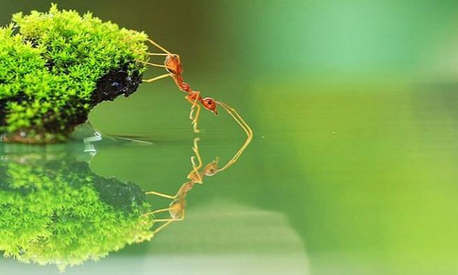 İşte hangi böcek senin kişiliğini yansıtıyor?