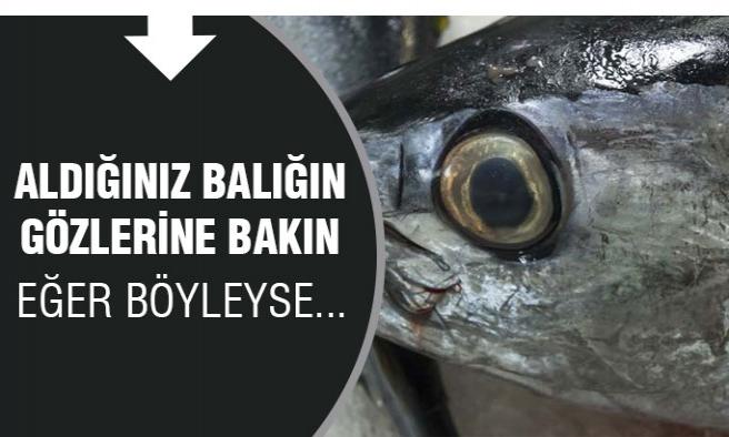 Taze Balığı Nasıl Anlarız ?