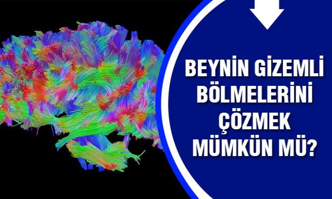 Bilim insanları beynin gizemli bölgelerini çözmek için...