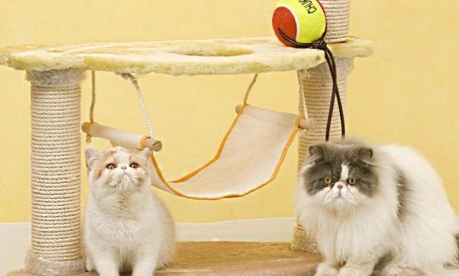 Kediler Hangi Kumaşı Tırmalamaz?
