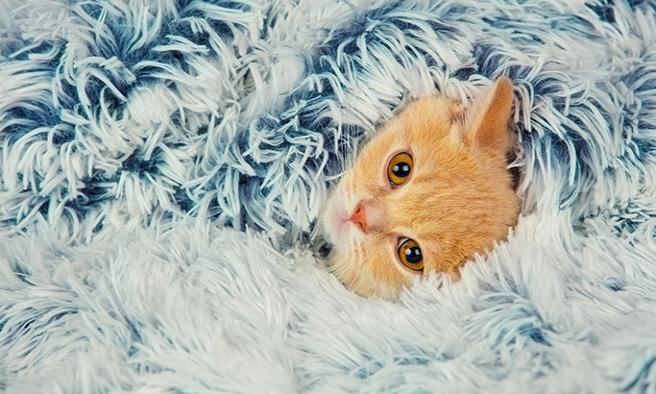 Kedilerde tırnak kesimi nasıl yapılır?