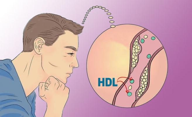 HDL Nedir? Düşüklüğü ve Yüksekliği Ne Anlama Gelir?