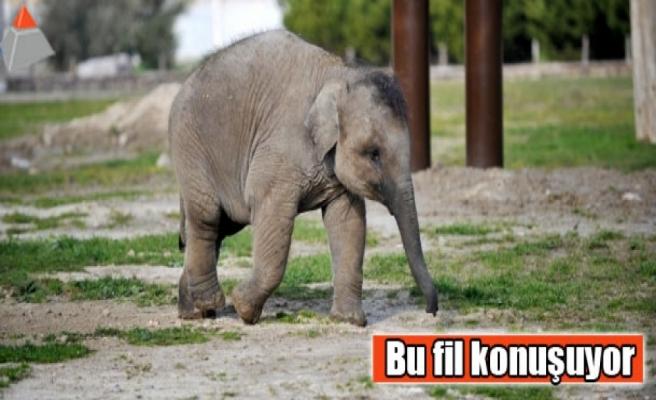Bu fil konuşuyor