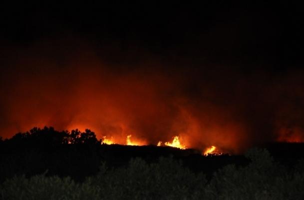 Didim'deki yangın yeniden başladı