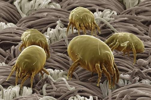 Evimizdeki Mikrop Yuvaları