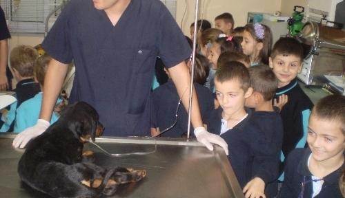 Veteriner kliniğini gezen minikler tedavisi süren hayvanları sevdi