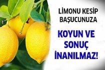 Birkaç Dilim Limonu Başucunuza Koyun Ve...