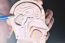 Yeni Yılda Sağlıklı Beyin