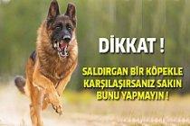 Herhangi Köpek Saldırısına Karşı Ne Yapmalı ?