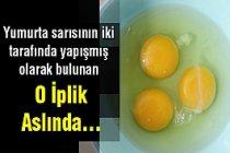 Yumurtanın İçerisindeki İplik Gibi Şey Nedir ?