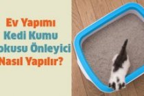 Ev Yapımı Kedi Kumu Kokusu Önleyici Nasıl Yapılır?