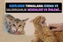Kedilerde tırmalama ısırma ve saldırganlık nedenleri ve önlemi