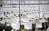 Arafat'a 60 bin yanmaz çadır kuruluyor