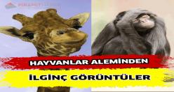 Hayvanlar Alemiden İlginç Anlar