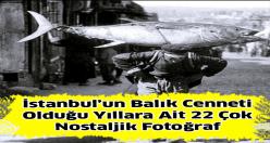 İstanbul'un Balık Cenneti Olduğu Yıllar