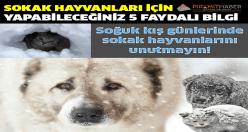 Soğuk kış günlerinde sokak hayvanlarını unutmayın!