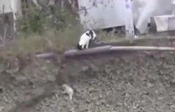 Çukura düşen köpek yavrusunu kurtaran kedi.!