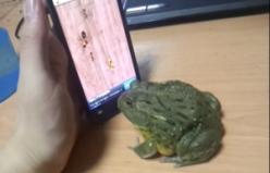 Kurbağayla Oyun Oynamanın Sonu...