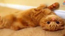 Kedilerin en sevimli halleri