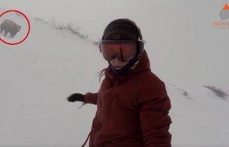 Snowboard Yaparken Peşine Ayı Takılan Kız...
