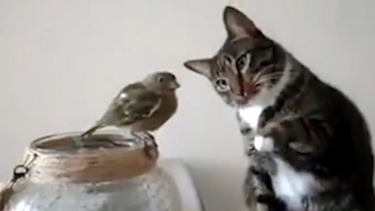 Kedi zarar vermeden sevmeye çalışıyor!