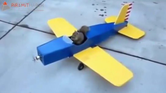 Sincap maket uçağını kaçırıyor :)